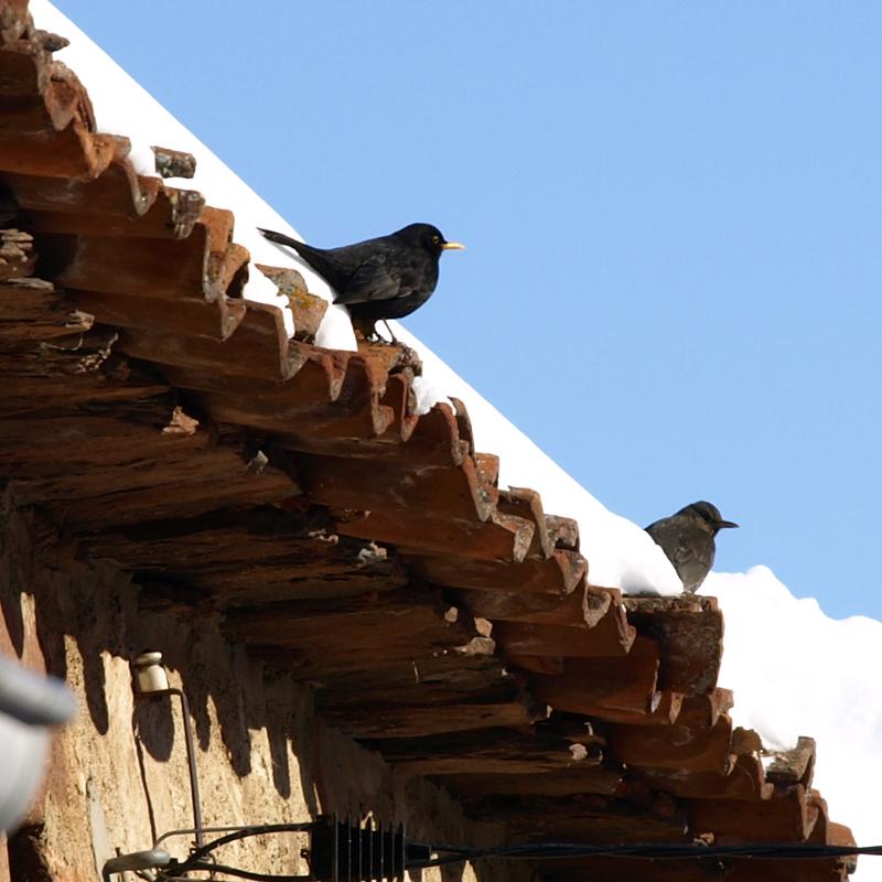 aves19
